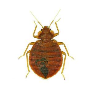 JAPCO Bed Bug Control