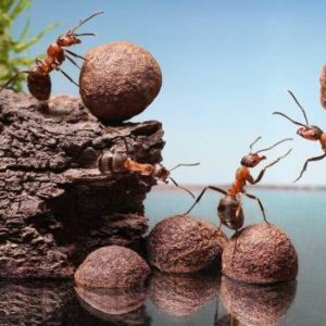 JAPCO Mound & Thatching Ants Control
