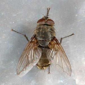 JAPCO Cluster Flys Control
