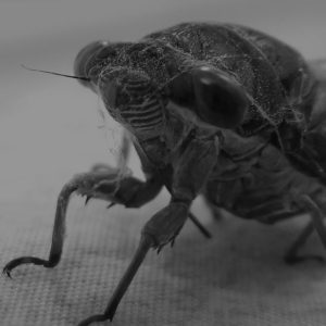 JAPCO Bed bugs Control
