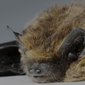 JAPCO Bats Control