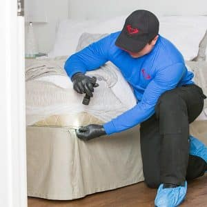 JAPCO Inspecting Bed Bug