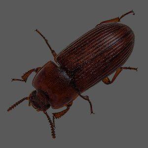 JAPCO Beetles Control