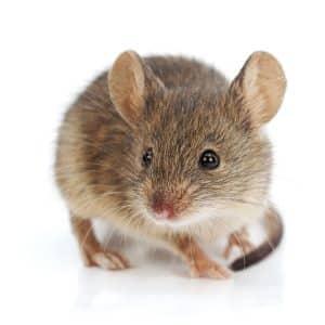 JAPCO Rodent Control