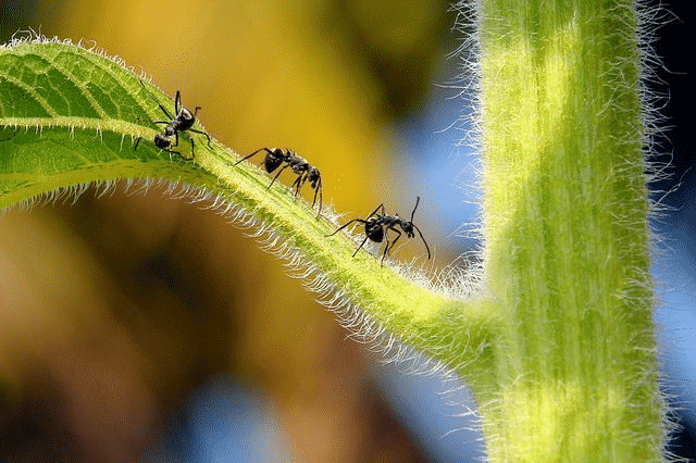 Ants marching on plant