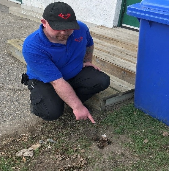 A ground squirrel's hole