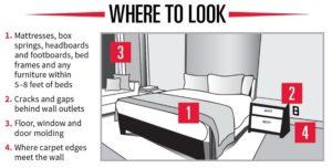 Bed Bugs Look Calgary