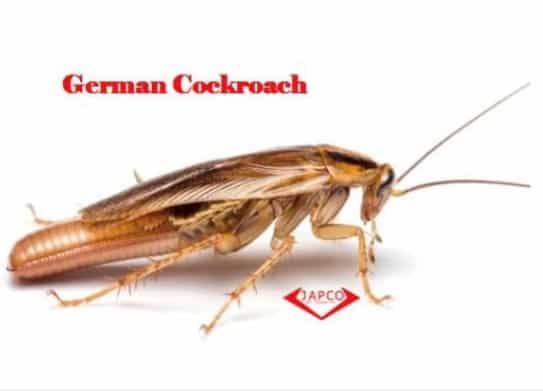 japco german cockroach pest control