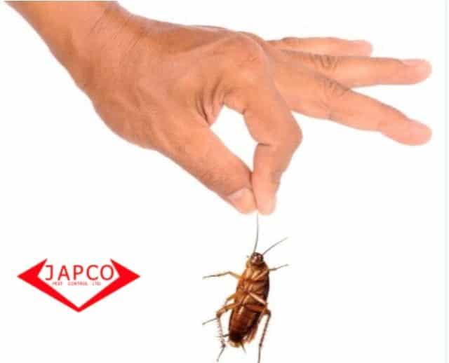 japco pest control cockroach