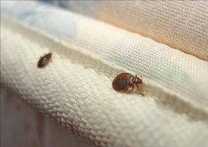 Travel Bed Bugs Calgary