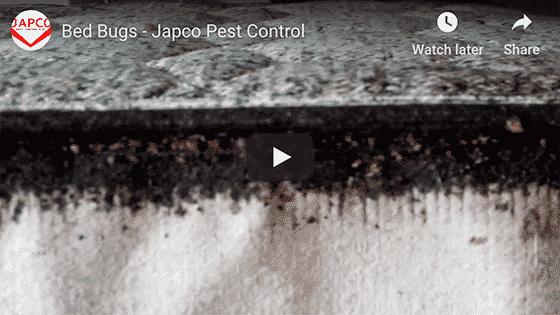 Japco Pest Control Bed Bugs