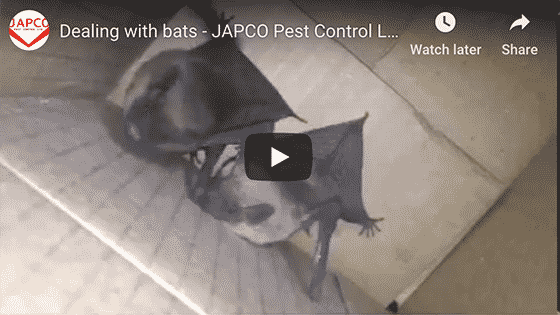Japco Pest Control Bats