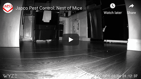 Japco Pest Control Nest of Mice