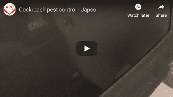Japco Pest Control Cockroaches