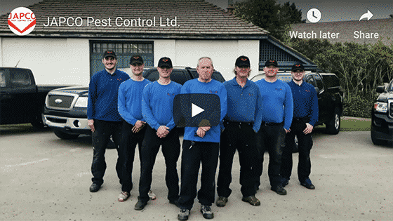 Pest Control Services in Alberta and Saskatchewan