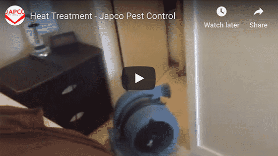 Japco Pest Control Heat Treatment Services