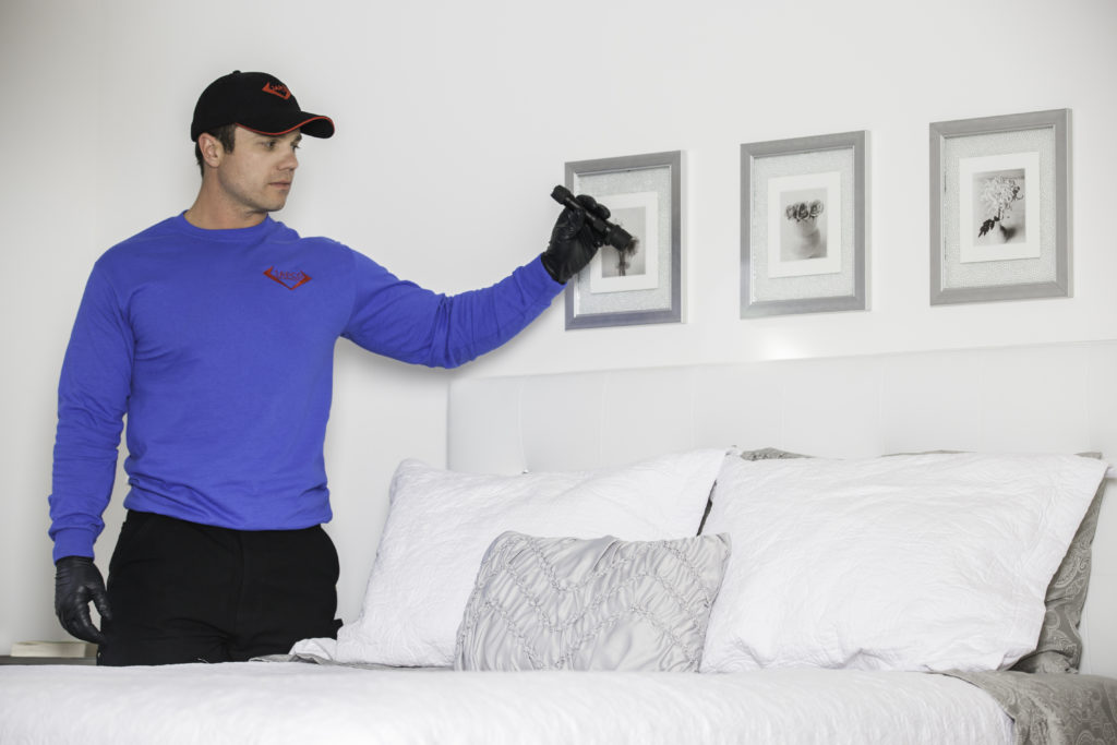 JAPCO technician inspecting a hotel for Bed Bugs